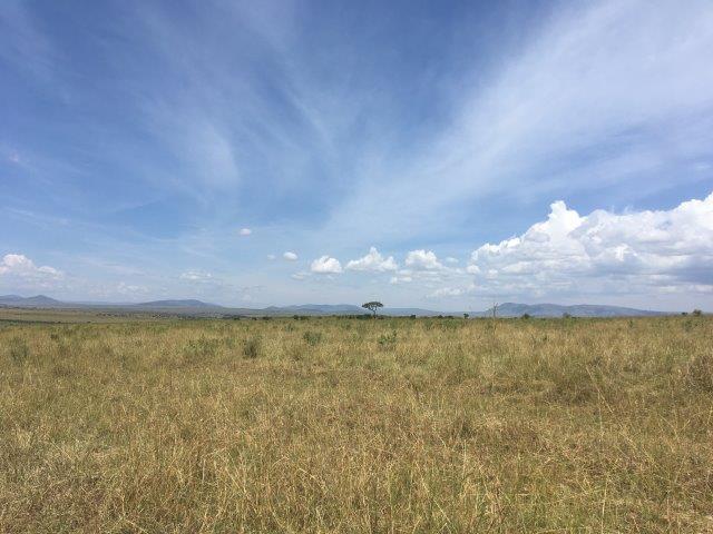 Kenya: Masai Mara safari